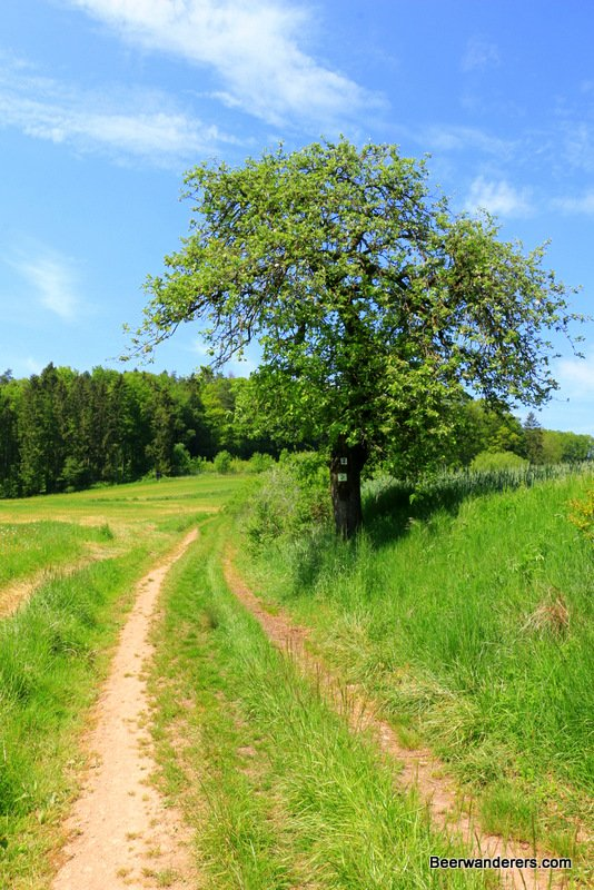 country road with tree