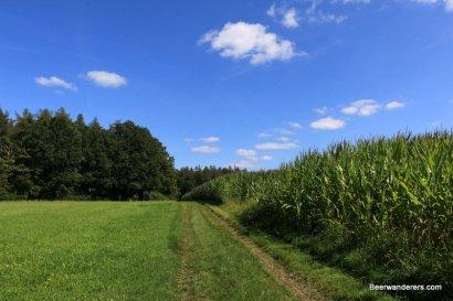 trail along field
