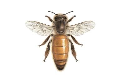 bee queen Βασίλισσα / Carim Nahaboo carimnahaboo.com