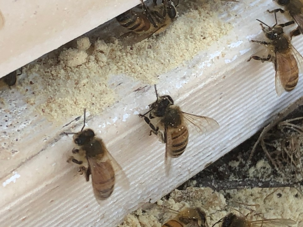 Bee Build in hive entrance