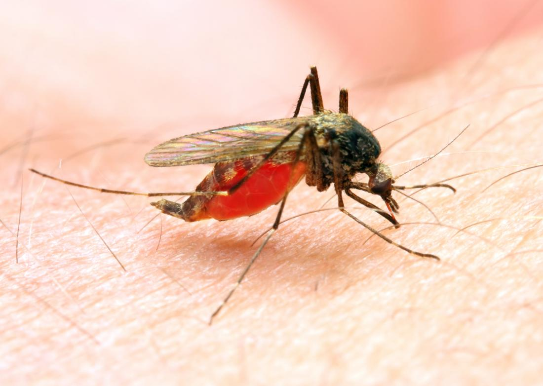 mosquitoes malaria