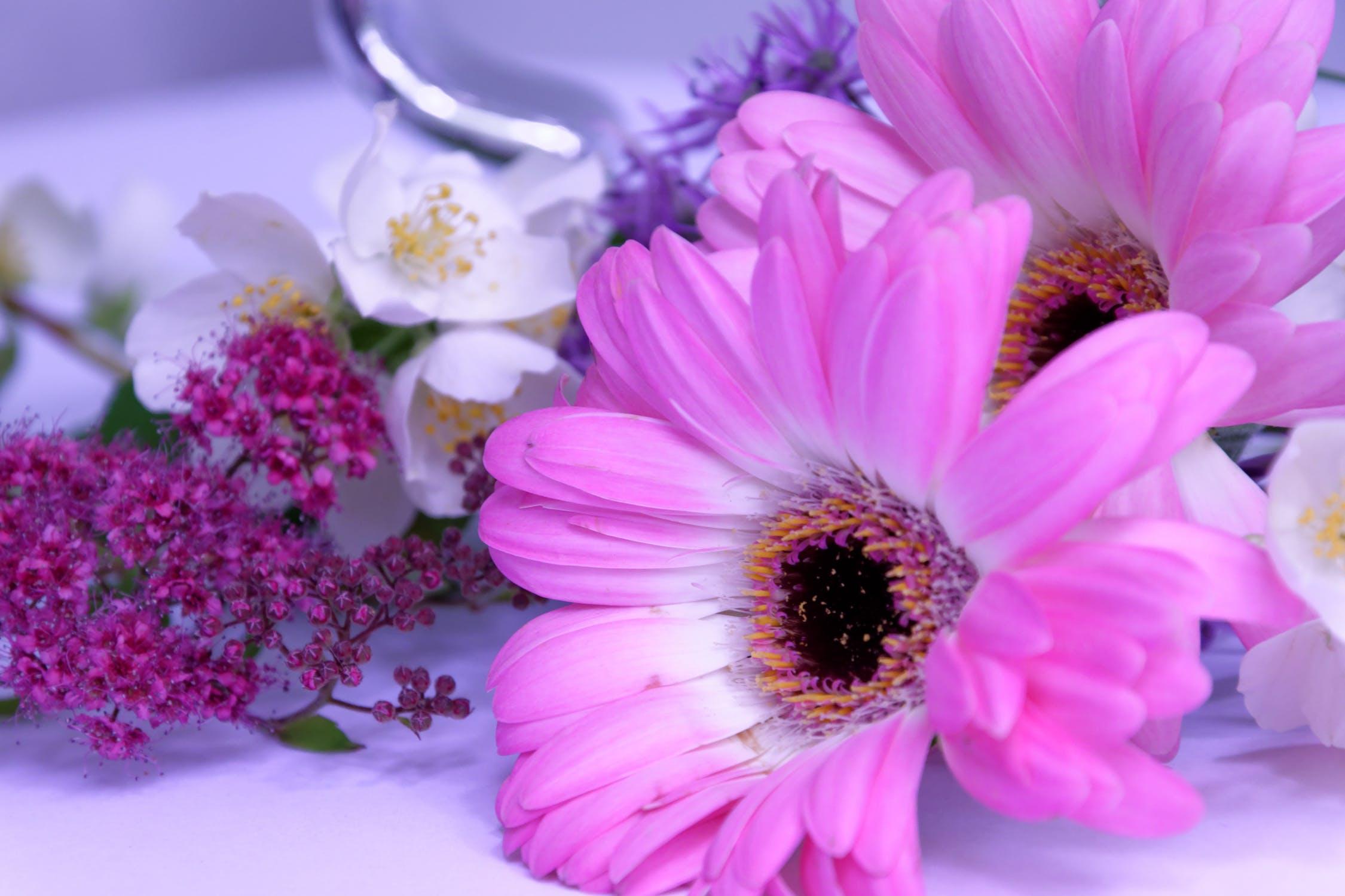Jasmine amazing flower lovely tea befantastico jasmine amazing flower lovely tea izmirmasajfo