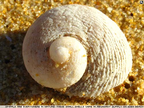 Spiral sea shell