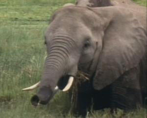 Animal Allies 105 elephant