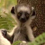 top 10 Cutest and Rarest Monkeys