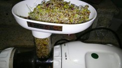 Pile the sprouts into the juicer!