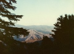 frame-trees-and-hills