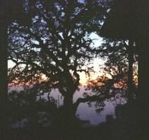 tree-and-winterline