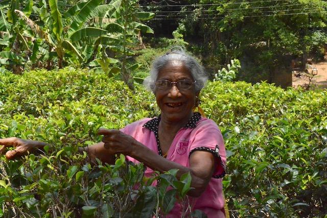 Sri Lanka: vedi il video