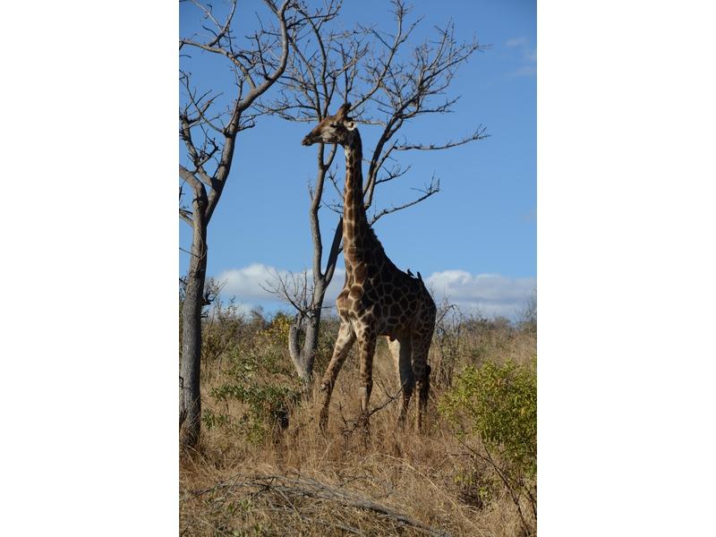 Parco nazionale Kruger: riserva Mthethomusha