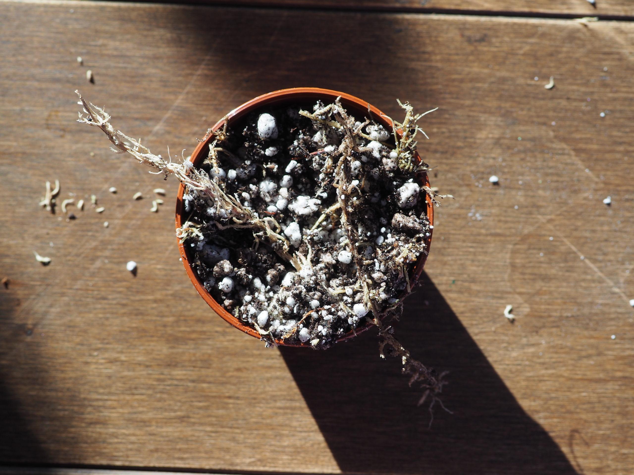 soil for begonias