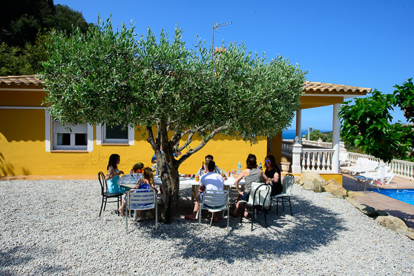 Lunch under the mottled shade of the olive tree.