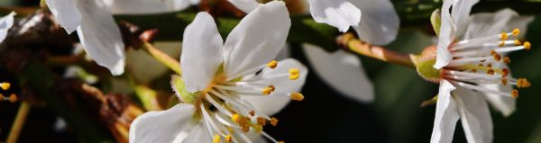 cropped-spring-1295597_1280.jpg