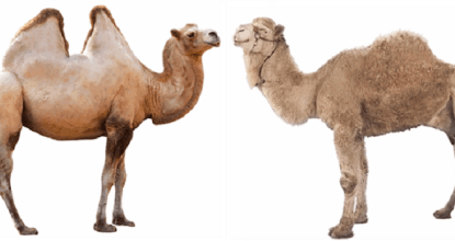 10 Interesting Facts About Camel 18 Behind History