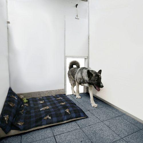 Inside a Dogs Boarding Kennel