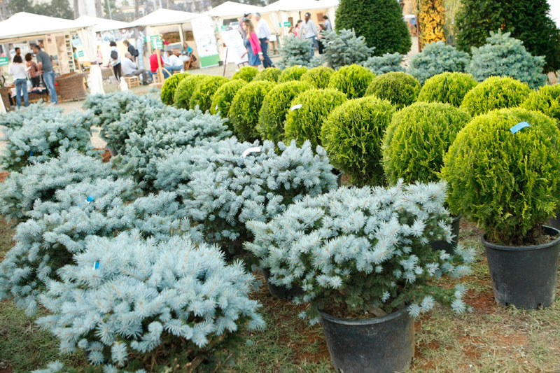 It's Springtime -The Garden Show and Spring Festival in 5 Weeks!