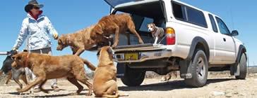 Hundehaftpflichtversicherung Vergleich
