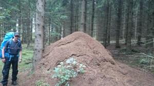 Största myrstacken jag någonsin sett