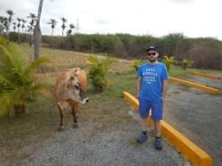 En ko och en Daniel