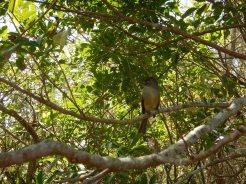 Oidentifierad fågel