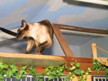 Cat boarding Oakville