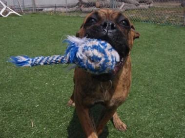 Dog playing catch