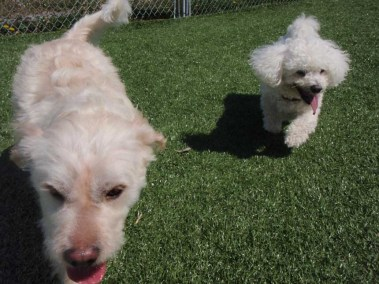 Variety of dogs at our Oakville kennel