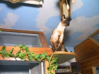 Cat jumping around