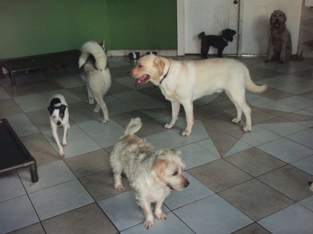Dogs inside play area