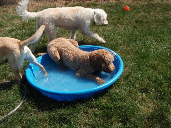 Dogs playground