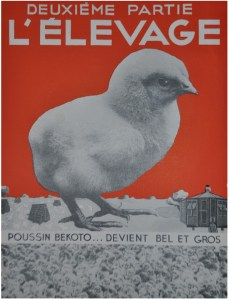 L'élevage en 1953
