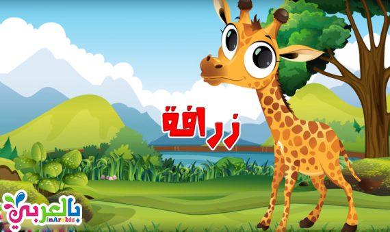 معلومات عن الحيوانات بالعربي نتعلم
