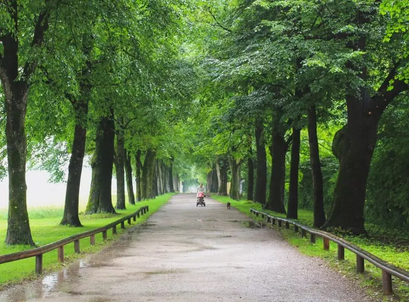 salzburg austria sound of music tour trees vanishing point road path aesthetic nature countryside country roads