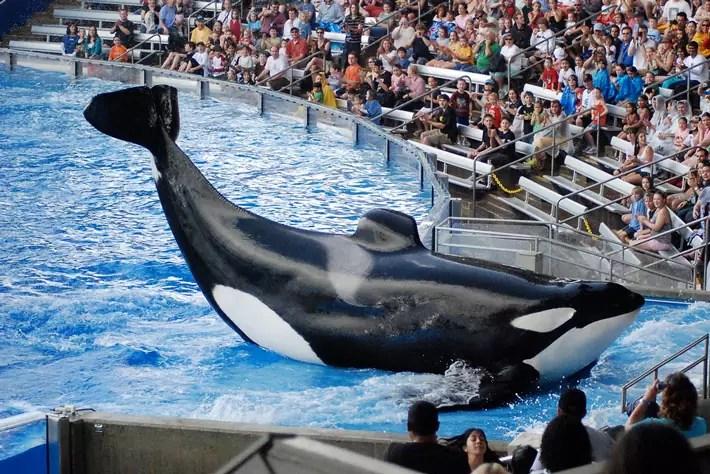 seaworld-orlando-florida-whale-shamu-show