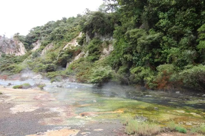 Moss, Waimangu Volcanic Valley, Rotorua New Zealand