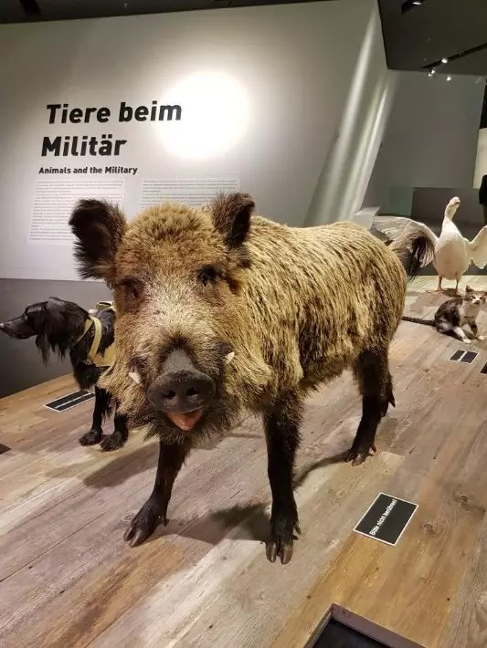 Bundeswehr Museum of Military History animal war, Things to Do in Dresden, Germany