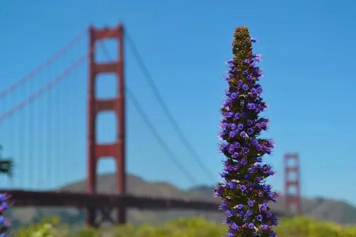 San Francisco - Golden Gate Park, Solo Travel Experiences, california, USA