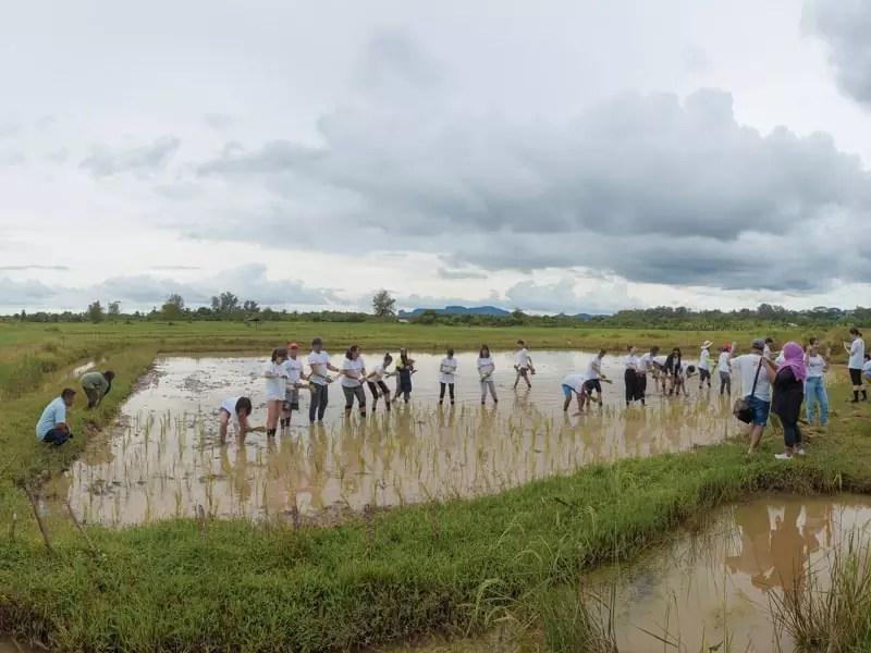 koh klang thailand rice planting farming people