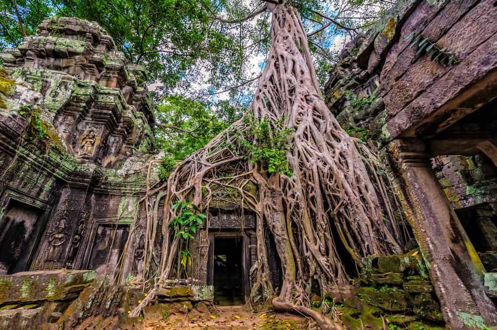 Ta Prohm, Angkor, 15-Day Vietnam-Cambodia Itinerary 18