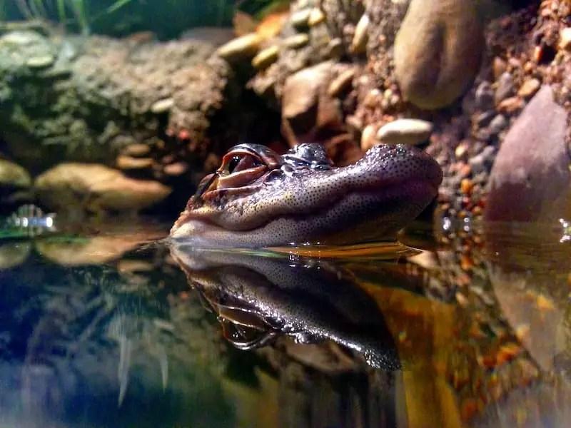 australian reptile park, Places to Visit Around Sydney, Australia