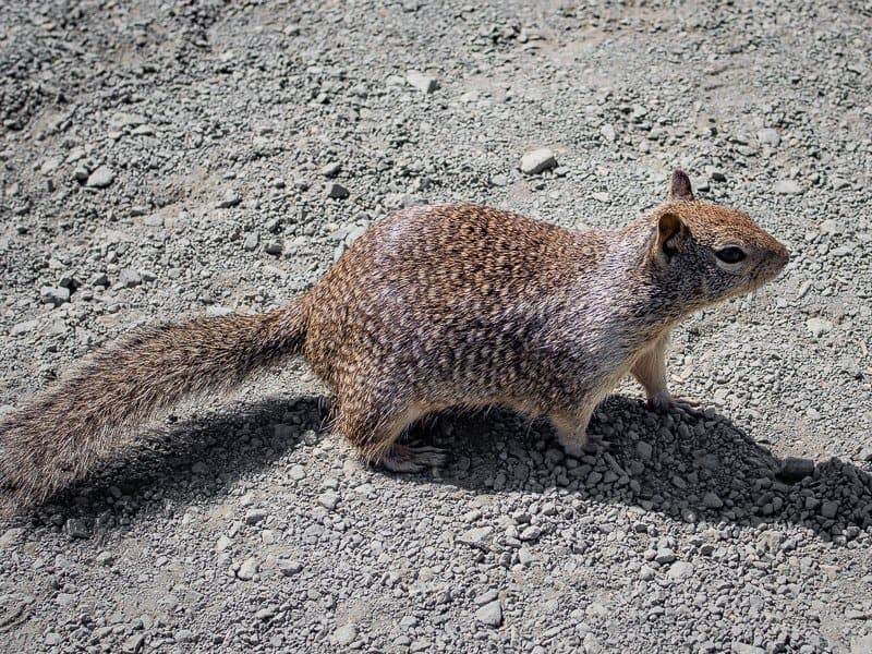 squirrels, san simeon, What-to-do-in-Cambria-California-USA