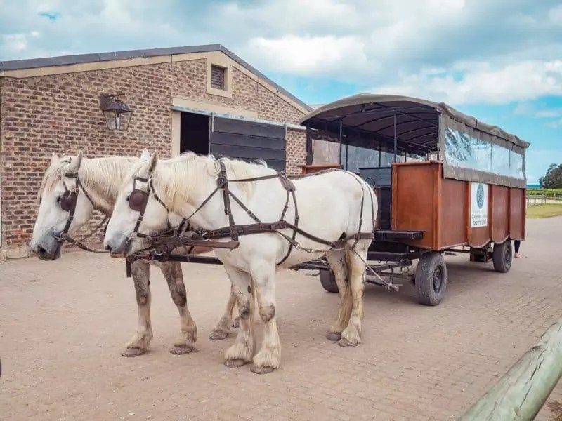 Kay-Monty-wines-horse-carriage-Plettenberg-Bay-South-Africa