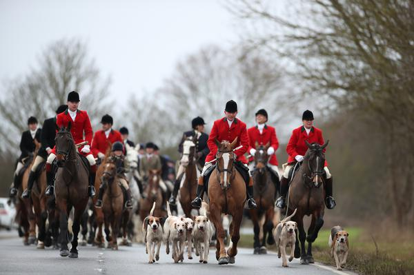 Calls for future Northern Ireland Assembly to ban hunting with dogs