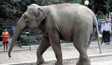 Bursa'da fil cinayeti! Arşivden yansıyanlar…