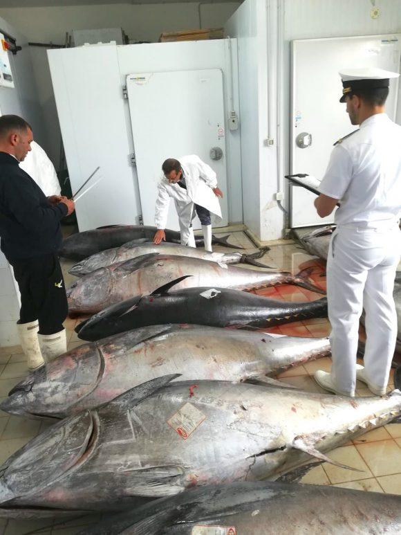 Quintali di tonno sequestrati a Marsala: rischio per la salute
