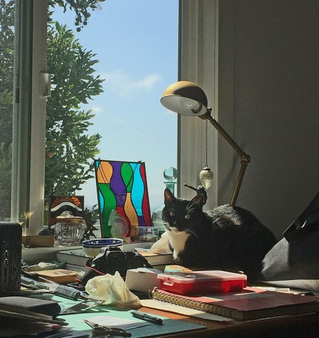 cat-in-the-studio