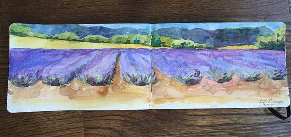 field-sketch-lavendin