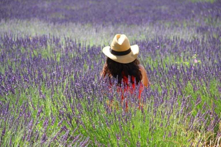 a woman sitting in a field of lavendar