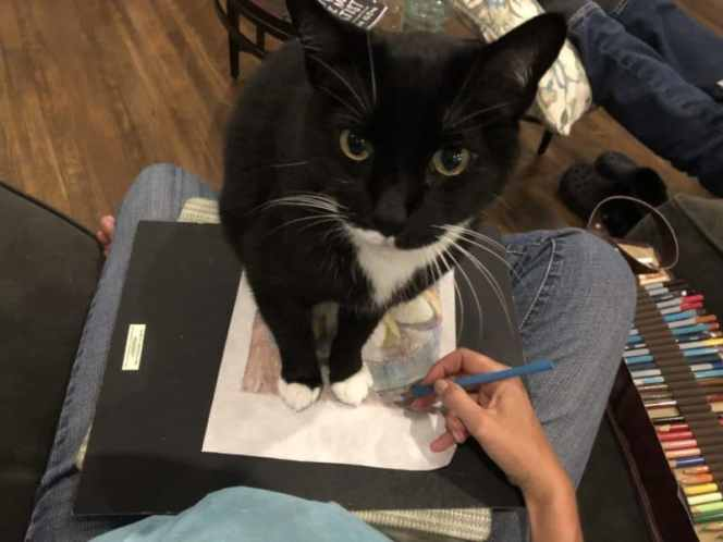 a cat interrupting art-making