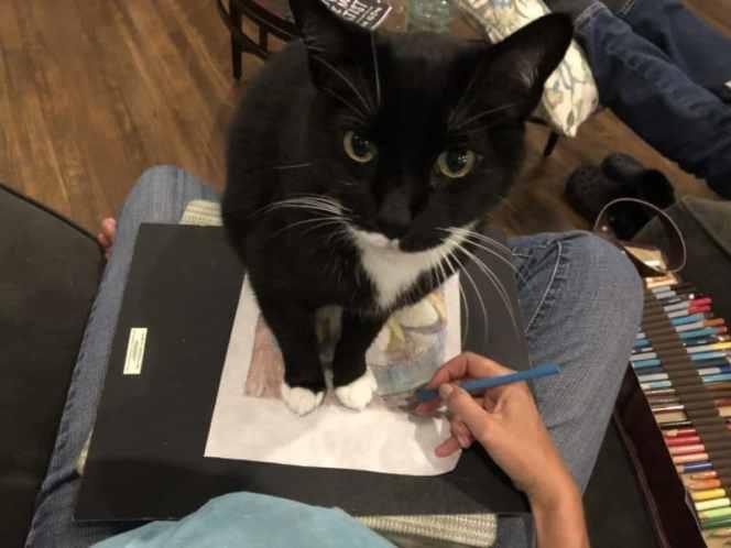 a cat interrupting art-making